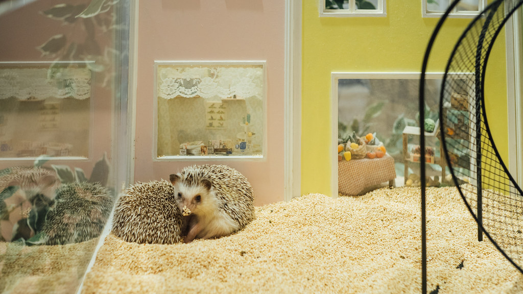 Hedgehod Cafe