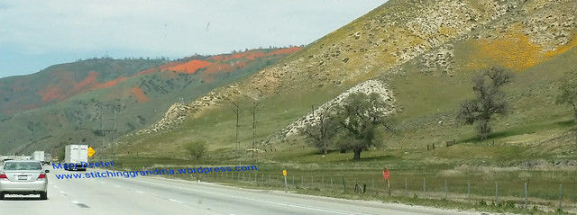 Poppies on the Grapevine