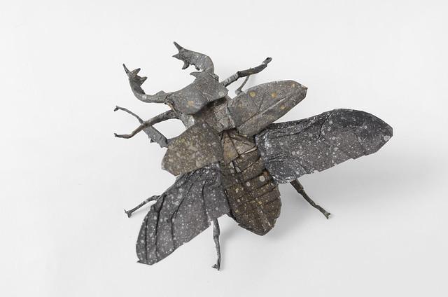 Miyama Stag Beetle, Nikon D7000, AF-S Micro Nikkor 60mm f/2.8G ED