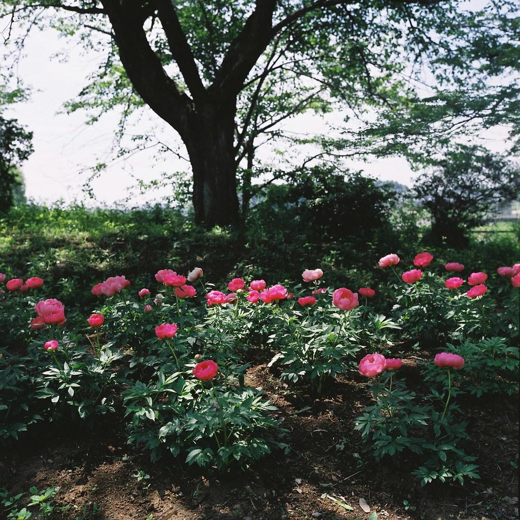 Peony Garden Tokyo