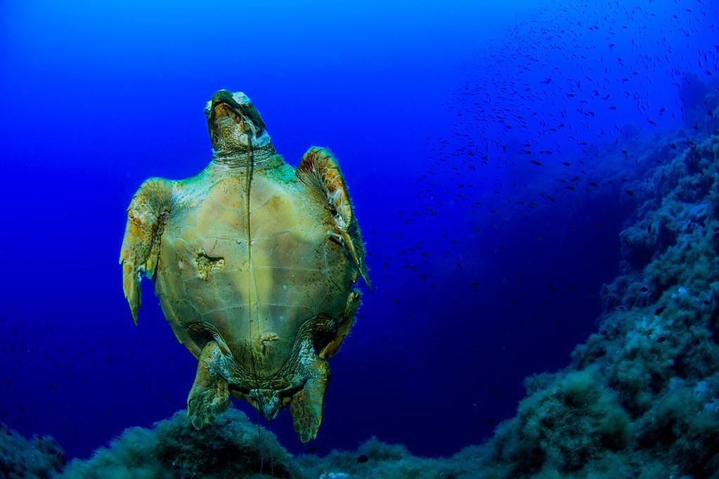 EUO © OCEANA Juan Cuetos 0180609_Punta Castagna_0182