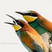 Bee-eaters eating... - Bijeneters eten....