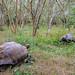Galapagos Giant Tortoise-3883 by kasiahalka (Kasia Halka)