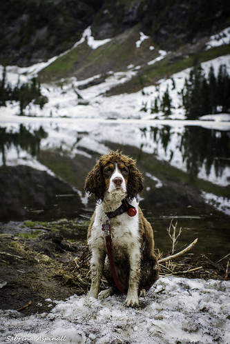 Truffle at Heather Lake | by Sabrina Aspinall