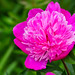 More colour from Brodsworth