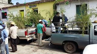 Cercos vivos - Jonacatepec (20150904)