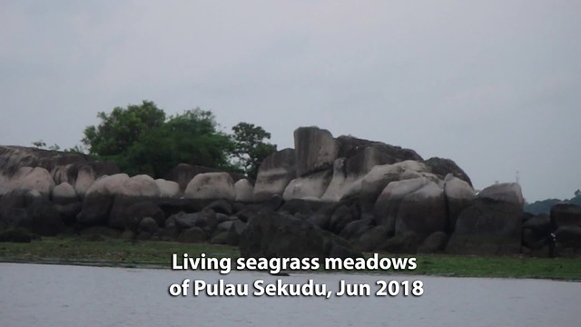 Living seagrass meadows of Pulau Sekudu, Jun 2018