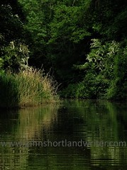 Oxford Canal nr Thrupp