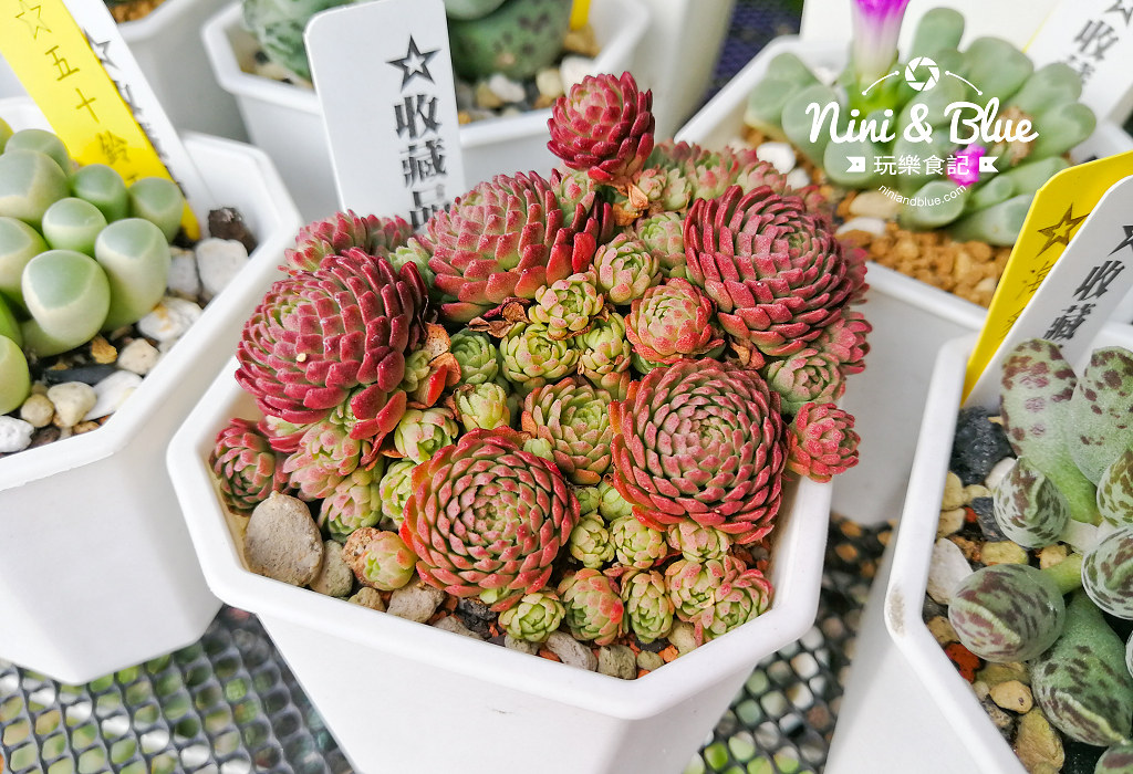 蘭心花卉 多肉植物17