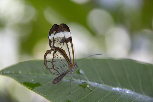 Butterfly Center_64