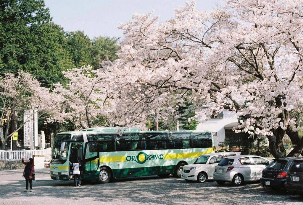 2018-05-20 河口湖の桜 003