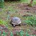 Galapagos Giant Tortoise-3904 by kasiahalka (Kasia Halka)