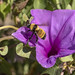 pollenizing por ikarusmedia