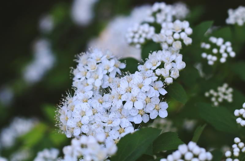 kukkia 3