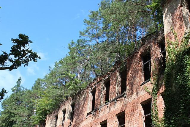 Ruinen mit Bäumen in Beelitz-Heilstätten