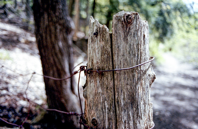 Old Fence Post_