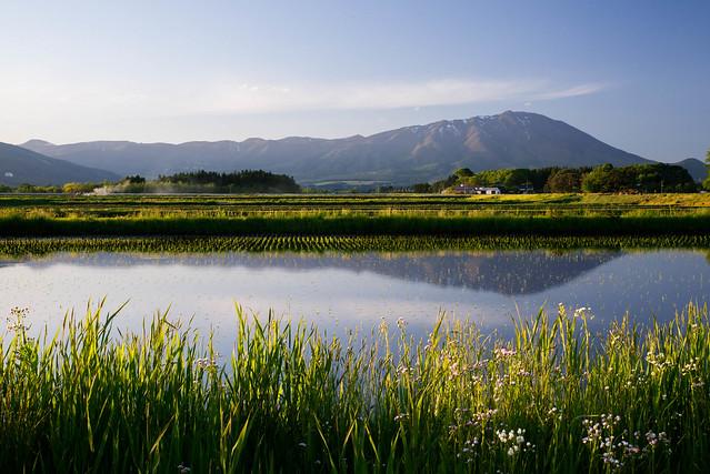 Paddy field, Nikon D610, Sigma 150-500mm F5-6.3 DG OS APO HSM
