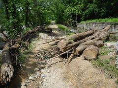 DSCN4069 04 Lock 32 Ash Debris & Erosion