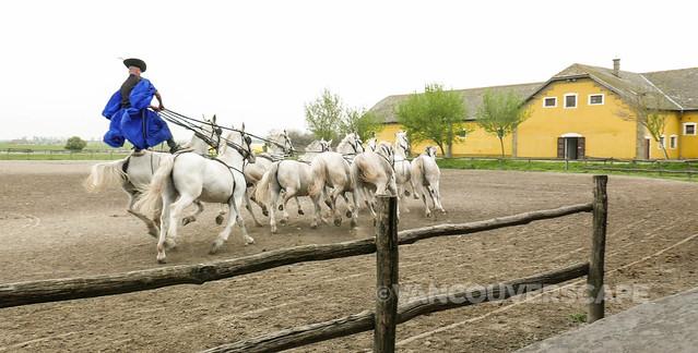 Pustza, Hungary-6