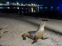 Puerto Baquerizo Moreno at night; San Cristobal Island