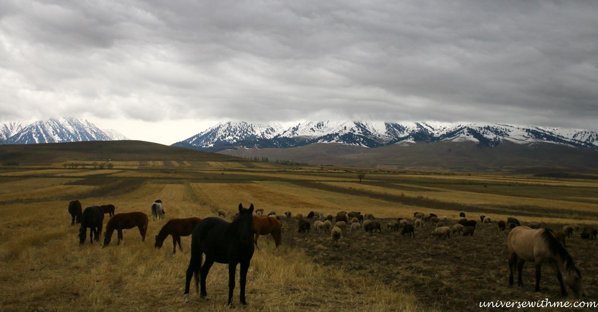 Kyrgyzstan travel_379