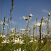 South Gare Flowers 2