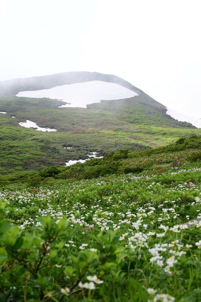 焼石岳とお花畑