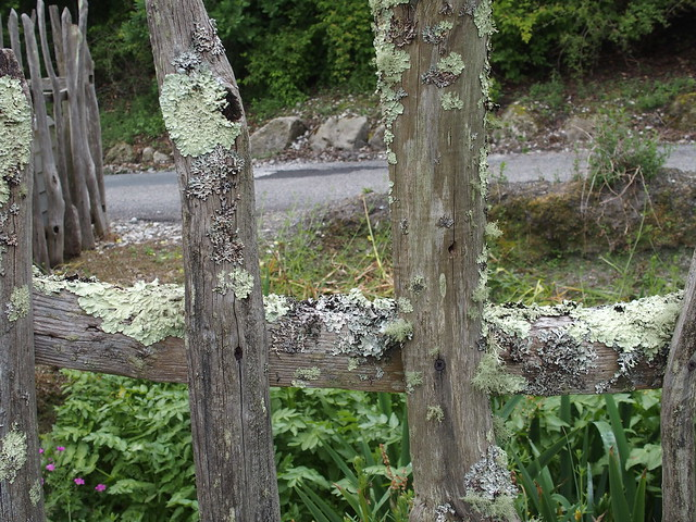 Lichen fence
