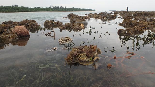 Living reefs of Terumbu Raya, June 2018