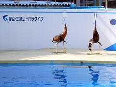 Izu-Mito Sea Paradise 伊豆・三津シーパラダイス
