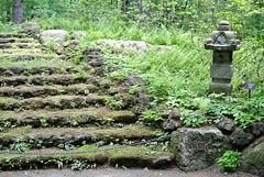 Moss steps