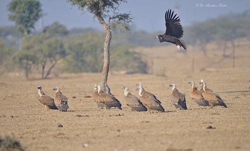 Vulturescape!!!