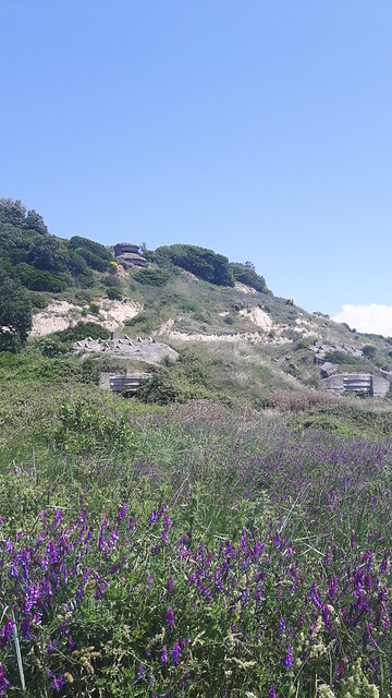 Purple flowers with a series of bunkers in the hills behind: Cape of Rodon, Albania
