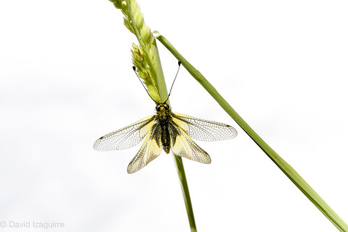 Dos hierbas, una gota y una mariposa