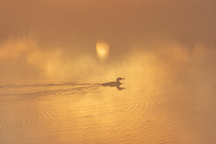 Sunrise With A Loon