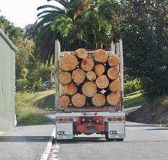 Truck with Cut Logs