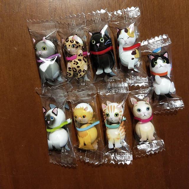 20180614 敲擊可愛的日本貓咪小糖果 謝謝怎麼吃都不會胖的 咪呀大美女 #沒有朋友怎麼辦