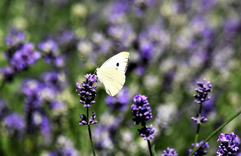 Butterfly 14.06 (2)
