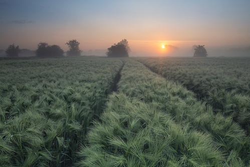 canon 5d markiii sunrise corn mist belgium
