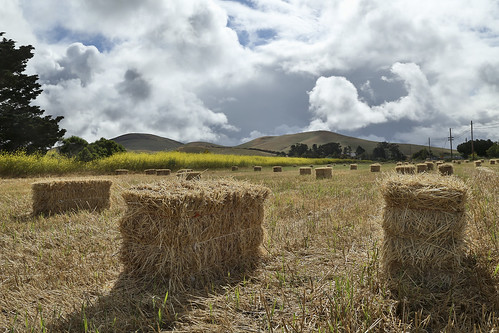 Hay Bales and the Dissipating Clouds