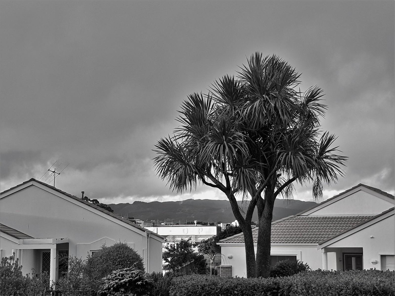 20180614_161206 (greyscale tree)