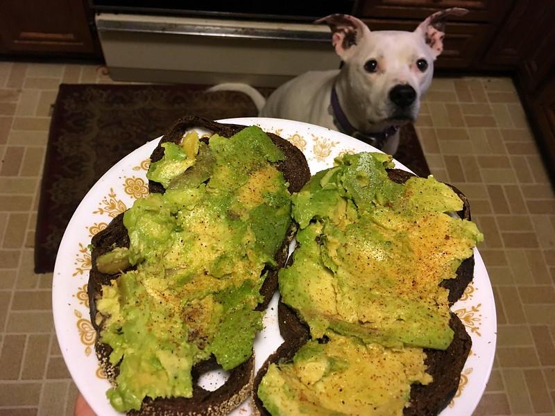 Avocado Toast & Auggie