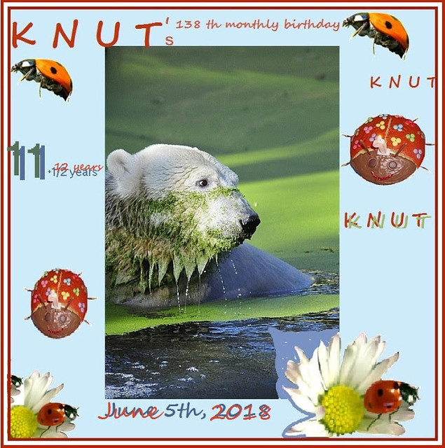KNUT_138thMonthly_11andHalfYear_COLLAGE_5Jun2018_07h45_180605