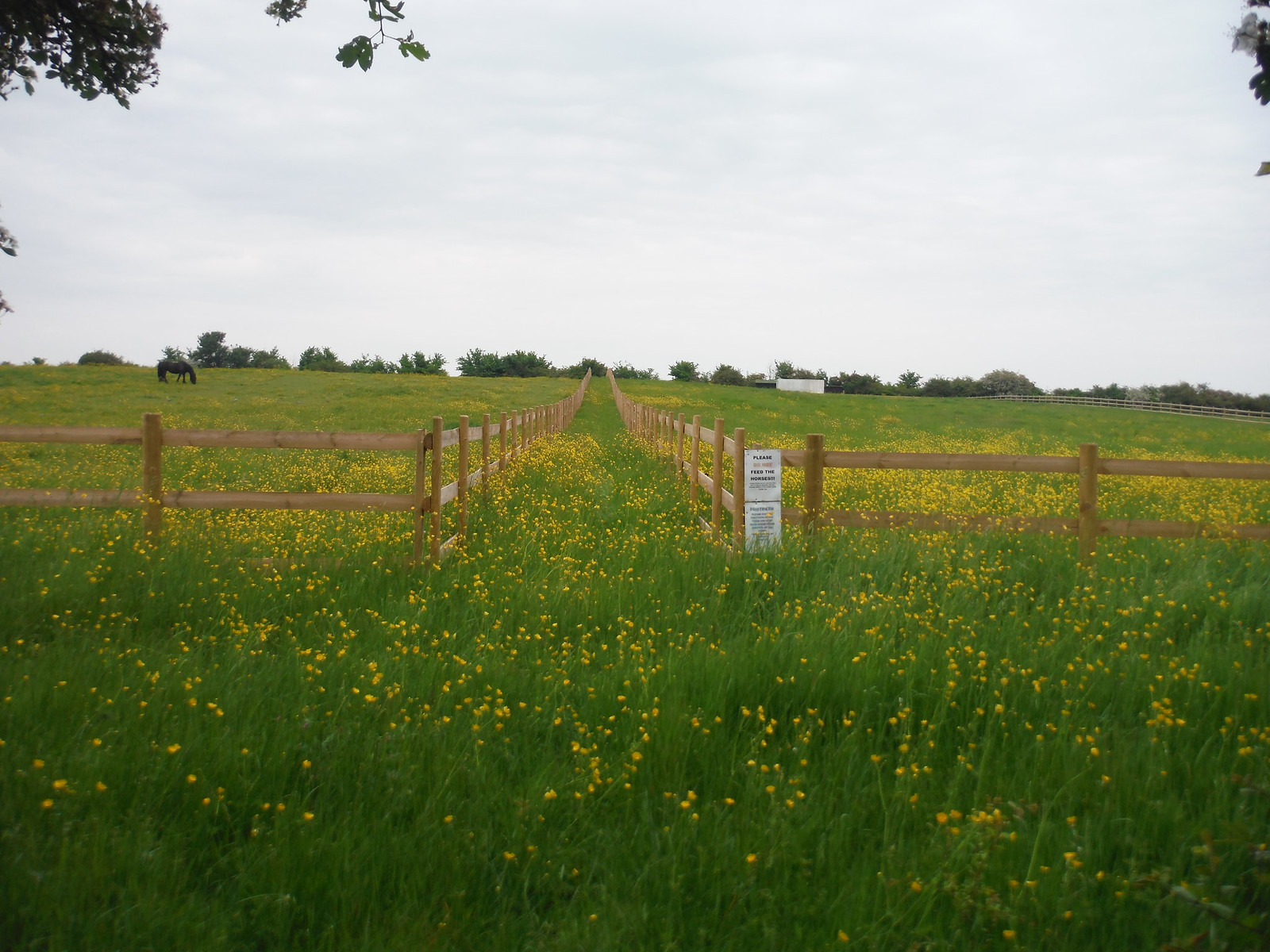 Path through Meadow SWC Walk 158 - Ingatestone to Battlesbridge or Wickford