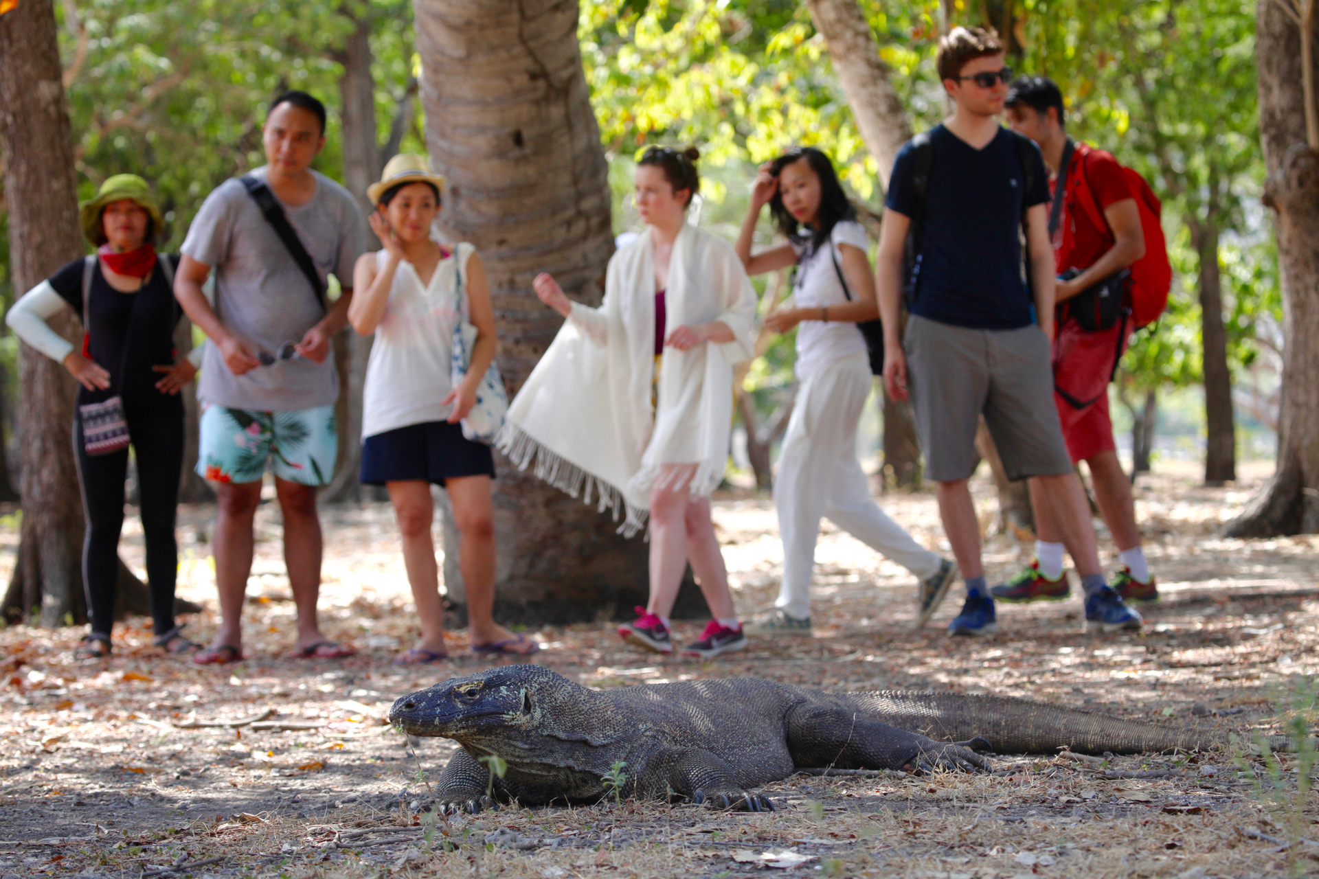 Komodo Island