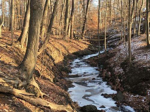 woods frozen ice winter sunset gloaming