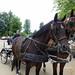 13-06-2018 Eper paardenvierdaagse te Vaassen
