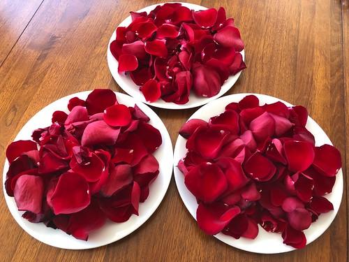 FTR: A dozen rose petals