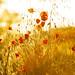 The light of Spring by cuellar
