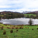 Loughrigg Tarn & Langdale Pikes